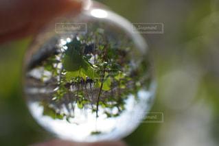 新緑の写真・画像素材[1093101]