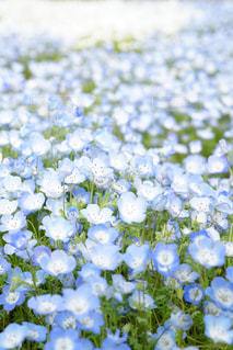 近くの花のアップの写真・画像素材[1154956]