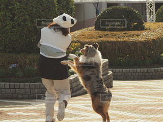 犬と戯れる女性の写真・画像素材[1069607]