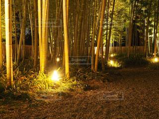 夜ライトアップ竹林の写真・画像素材[1069663]