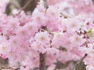 近くの花のアップの写真・画像素材[1070963]