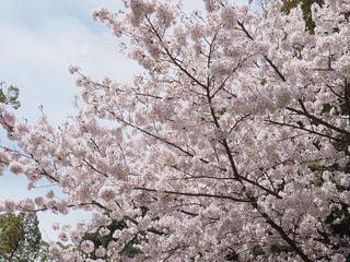 近くの木のアップの写真・画像素材[1070964]