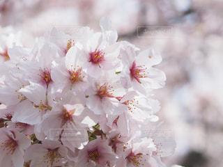近くの花のアップの写真・画像素材[1070967]