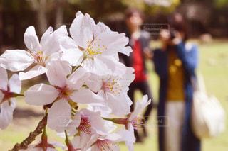 近くの花のアップの写真・画像素材[1070968]
