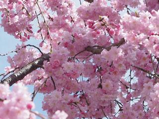 近くの植物にピンクの花のアップの写真・画像素材[1070970]