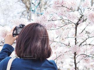 桜を撮る人の写真・画像素材[1070973]