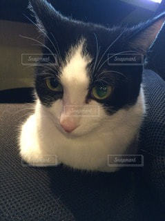猫 - No.41738