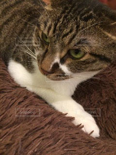 猫 - No.41750