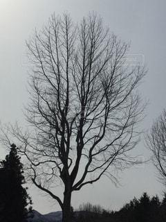 近くの木のアップの写真・画像素材[1066859]