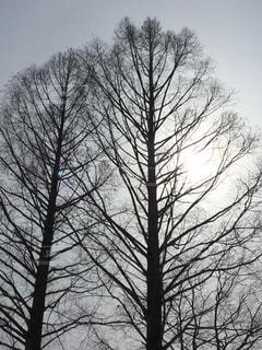 フォレスト内のツリーの写真・画像素材[1066862]