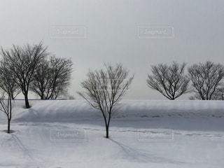 雪に覆われたフィールド ダウン スキーに乗る男の写真・画像素材[1066863]