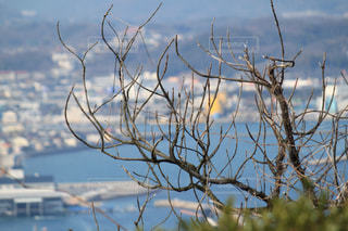 山の上から見た海辺の街並みの写真・画像素材[1066991]