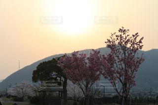 夕焼けと桜の木の写真・画像素材[1101049]