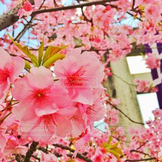 開花の写真・画像素材[1067017]