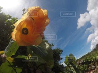 晴天に咲く花の写真・画像素材[1067669]