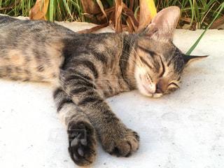 子猫の休日の写真・画像素材[1068111]