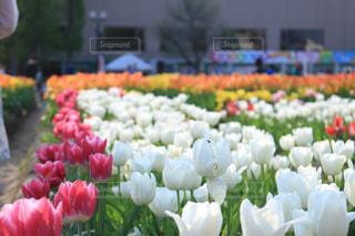 近くの花のアップの写真・画像素材[1067139]