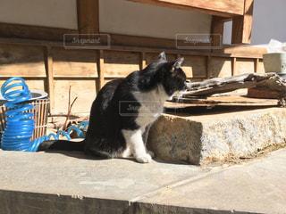温泉街の老舗旅館の看板猫 - No.1068341