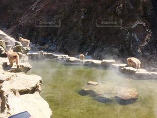 地獄谷温泉の野生の猿4匹の写真・画像素材[1080351]