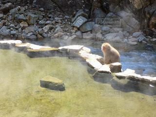 岩の上に座っている地獄谷温泉の日本猿の写真・画像素材[1082318]