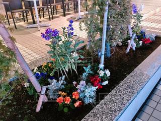 夜の花壇の花の写真・画像素材[1085621]