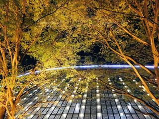 東京ドームとライトアップされた木の写真・画像素材[1085633]