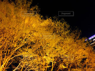 ライトアップされた木と、ビルの写真・画像素材[1085646]