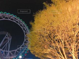 ラクーアの観覧車とライトアップされた木の写真・画像素材[1085647]