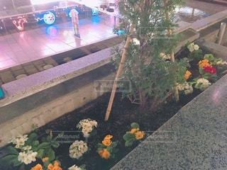 夜の花壇の写真・画像素材[1085656]