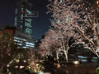 桜が咲く夜の街の景色の写真・画像素材[1087942]
