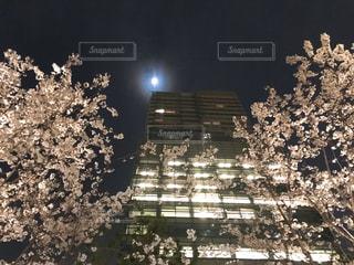 夜ライトアップされた建物と桜の写真・画像素材[1088068]