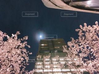 東京の夜のビルと桜 - No.1088070