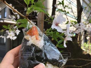 おにぎりを持って花見の写真・画像素材[1091005]