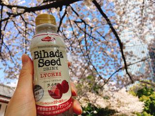 ビハダシードのバジルシードジュースと満開の桜の写真・画像素材[1091633]