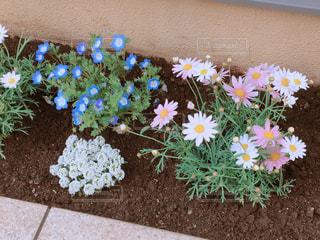 花壇に咲くかわいい花の写真・画像素材[1092539]