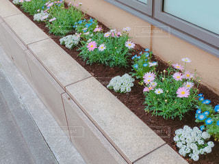 花壇の花の写真・画像素材[1092540]