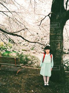小学校入学の女の子が桜の下で記念撮影の写真・画像素材[1096838]