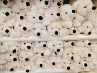 ぎゅうぎゅうの白熊のぬいぐるみの写真・画像素材[1099128]