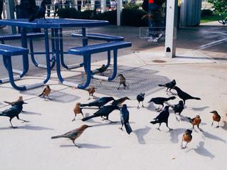 ケネディスペースセンターの鳥の写真・画像素材[1120869]