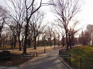 セントラルパークの写真・画像素材[1128572]