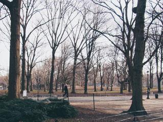 セントラルパークの遊歩道の写真・画像素材[1128573]
