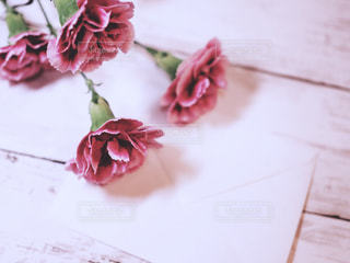 母の日のカーネーションの写真・画像素材[1133709]