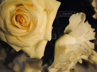 花の写真・画像素材[1584638]