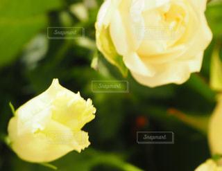 花の写真・画像素材[1584659]