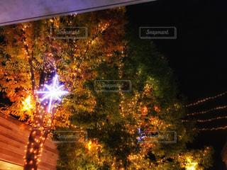 二子玉川ライズイルミネーションの写真・画像素材[1632269]