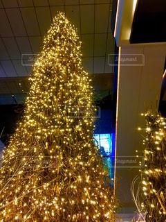 オーテモリのクリスマスツリーの写真・画像素材[1675898]
