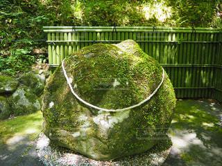 宙SORAの庭にある苔生した岩の写真・画像素材[1809174]