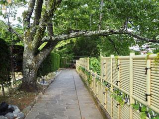 修善寺温泉の遊歩道の写真・画像素材[1809348]