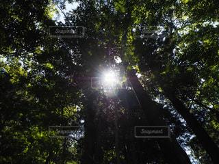 木漏れ日の写真・画像素材[1809872]