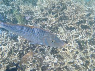ニューカレドニアのサンゴと熱帯魚の写真・画像素材[1826030]